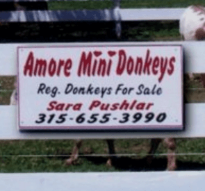 Amore Donkeys 1