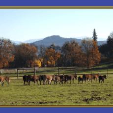 Benson Ranch 1