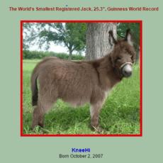 Best Friends Farm Miniature Donkeys 1