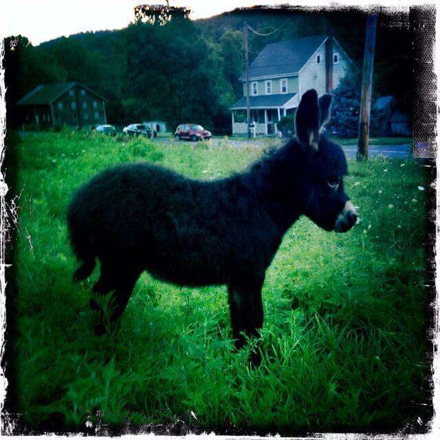 2015 Foal Copper Star Farm Queen Latifah