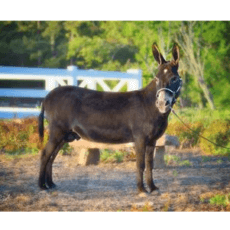 Donkey Ridge Farm1