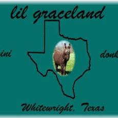 Lil Graceland Miniature Donkey Farm
