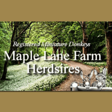Maple Lane Farm 1