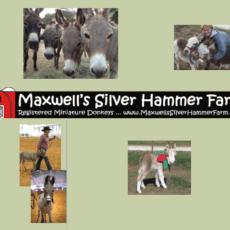 Maxwells Silver Hammer 1