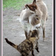 Morning glory mini donkeys 1
