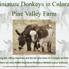 Pine-Valley-Farm-1.png