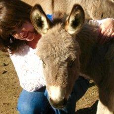 Wisteria donkeys are show-worthy, family pets.