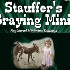 Stauffers Braying minis 1