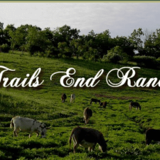 Trail's End Ranch 1