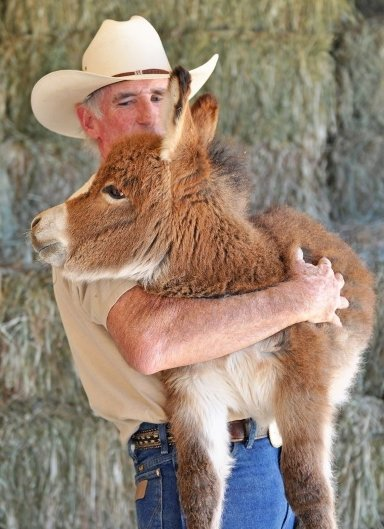 Donkey Love