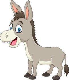 Browse Miniature Donkey Ads – Gotdonkeys Miniature Donkey Breeders
