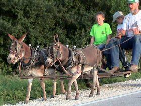 Donkey TEAM HARNESS